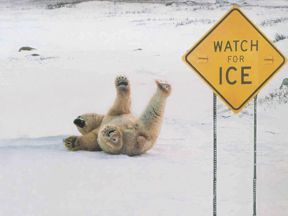 bear_on_ice